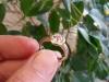18ct Rose Gold, Peach Sapphire